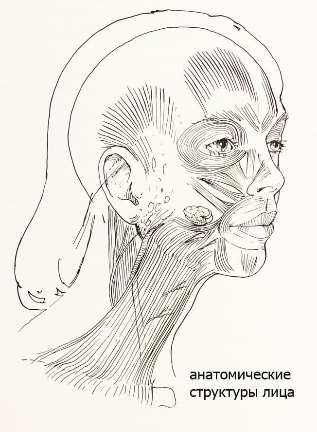 Анотомические структуры лица Спейс пластика Клинка Бьюти Спейс